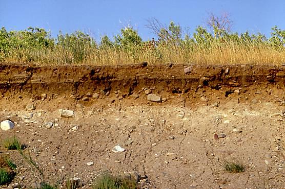 Jenis Tanah Organosol