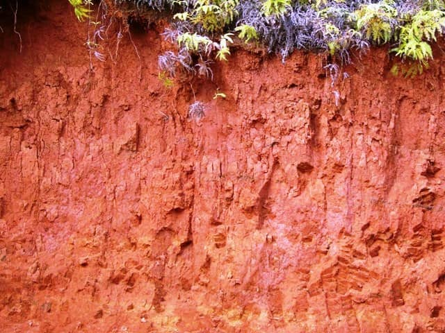 Jenis Tanah Podzolit