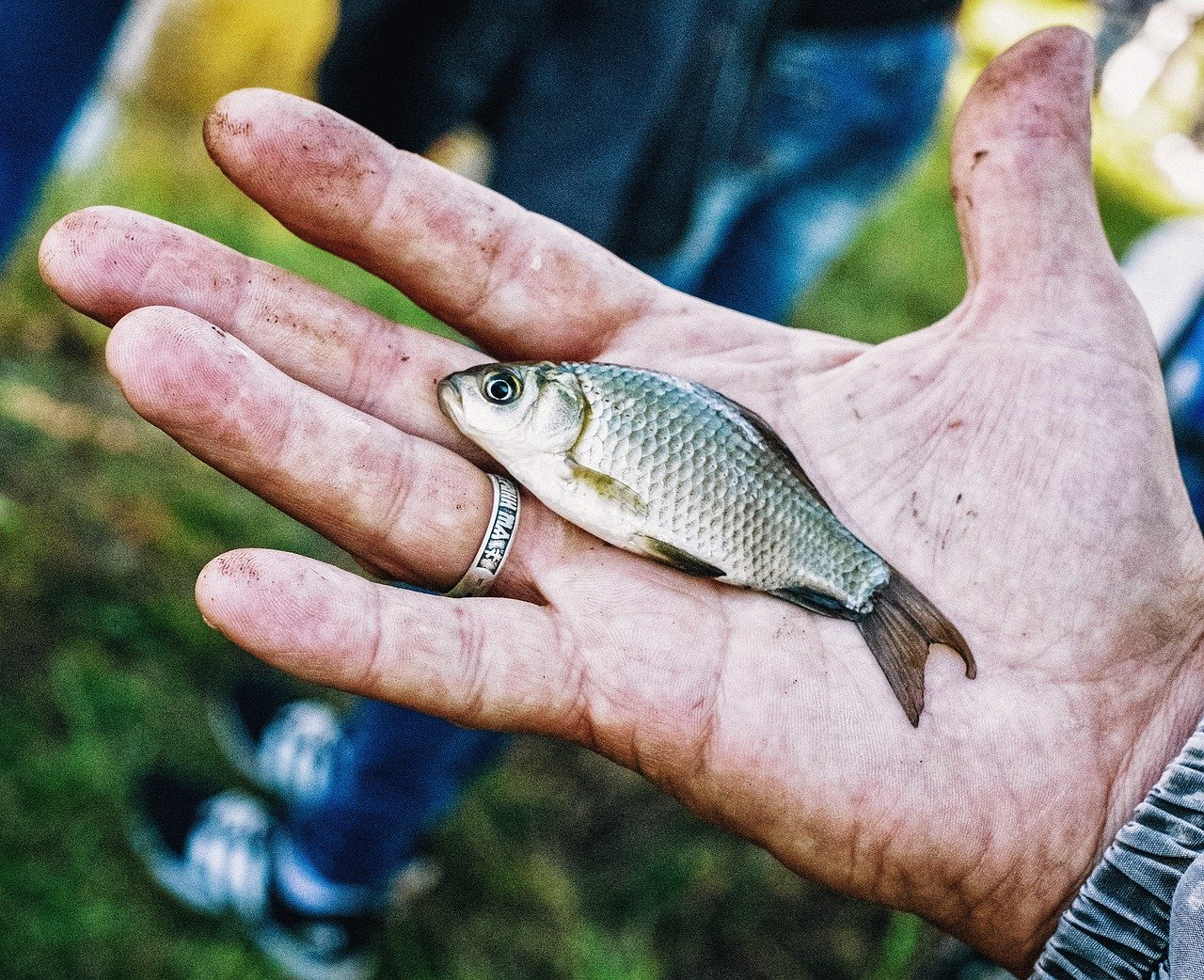 Tafsir Mimpi menangkap ikan
