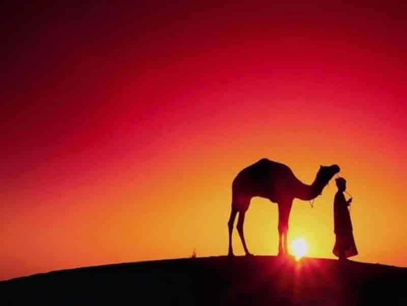Cara Nabi Sulaiman alaihis salam Bersyukur Kepada Allah