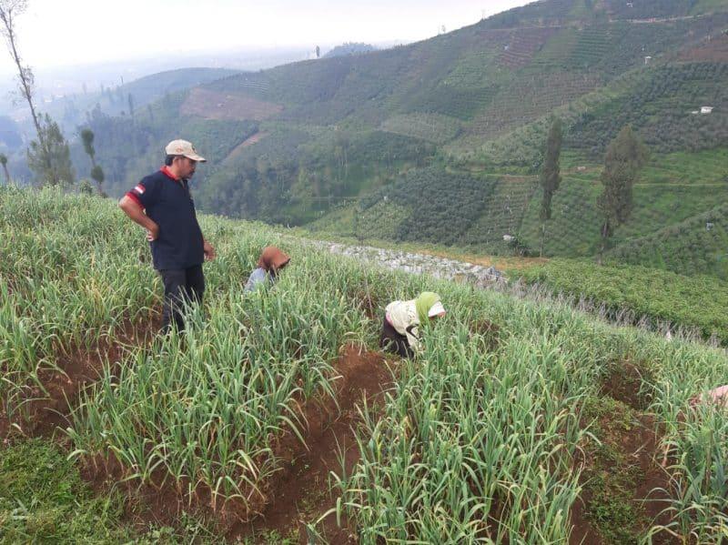 Contoh Daftar Riwayat Hidup Sarjana Pertanian