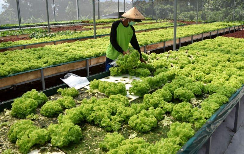 Daftar Riwayat Hidup Sarjana Teknik Agrobisnis