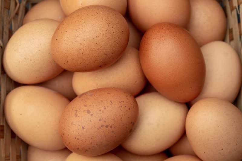 Hasil Observasi Alat Penetas Telur