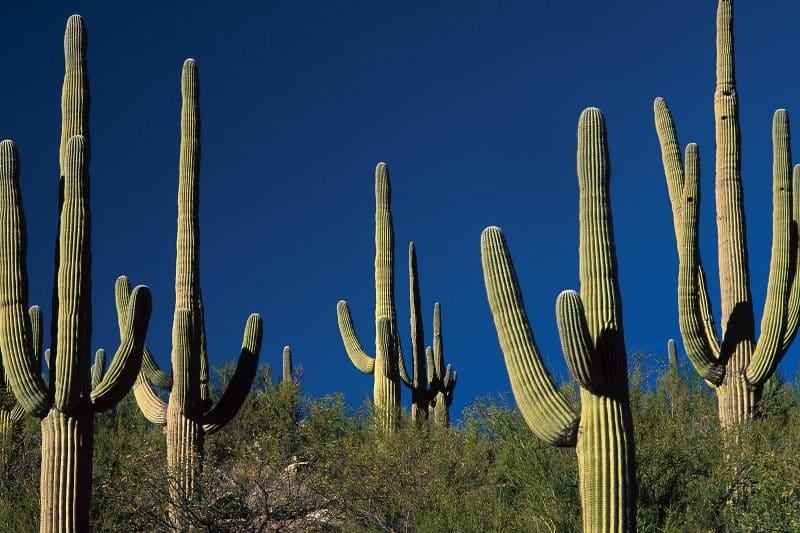Hasil Observasi Kaktus