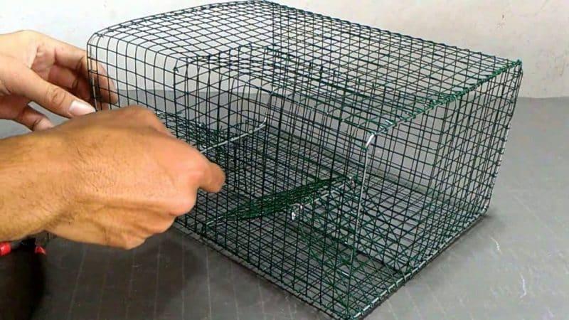 Membuat Jebakan Tikus