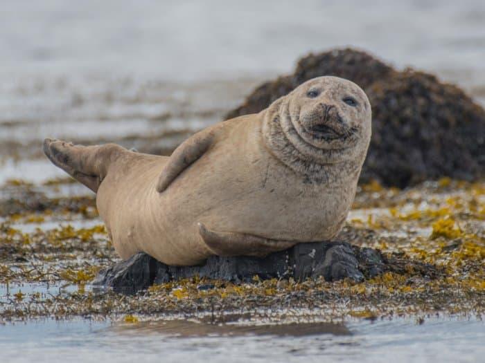 Jenis Anjing Laut Terunik Di Dunia