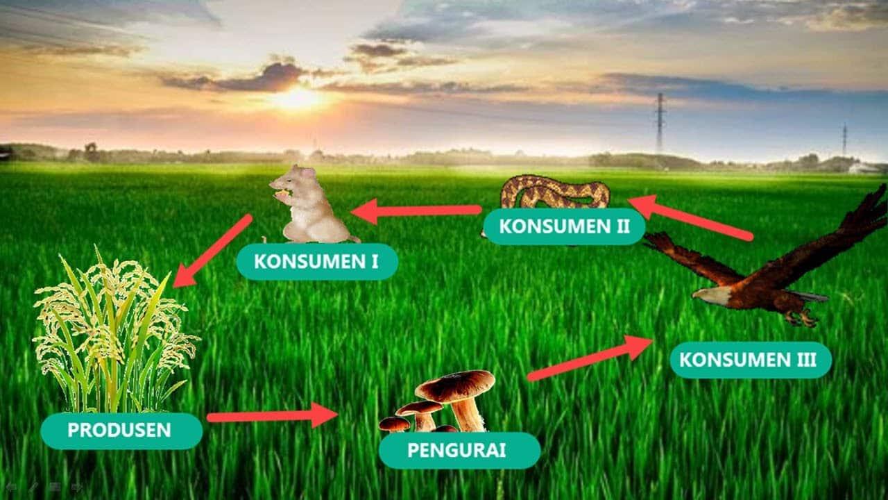 1. Ekosistem Sawah