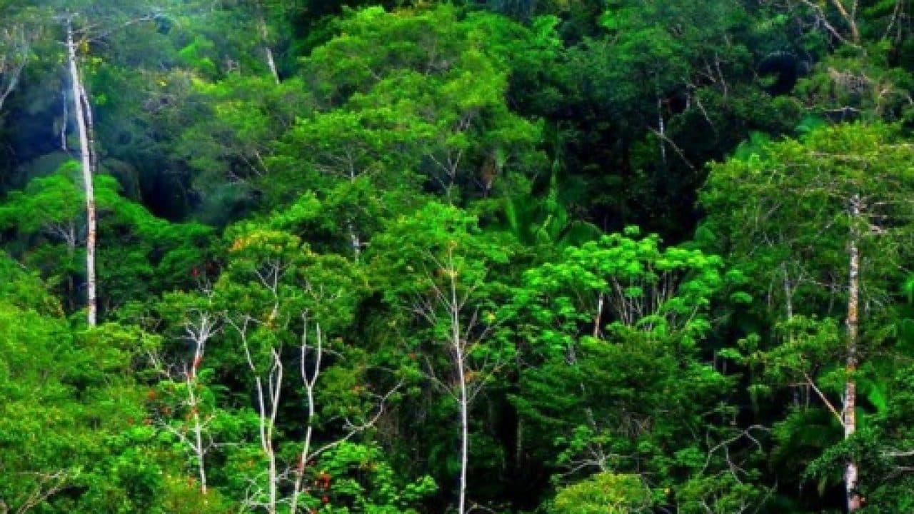 1. Memiliki vegetasi yang dominan dan luas