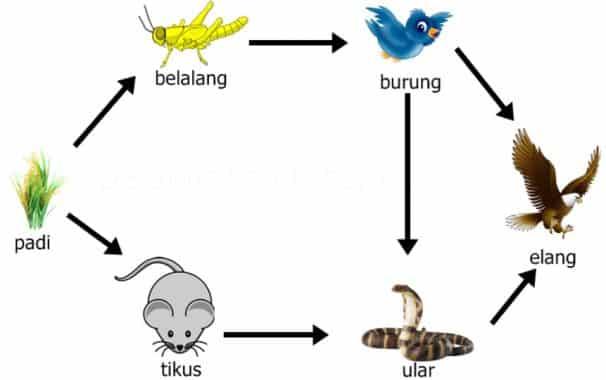 2. Komponen Biotik
