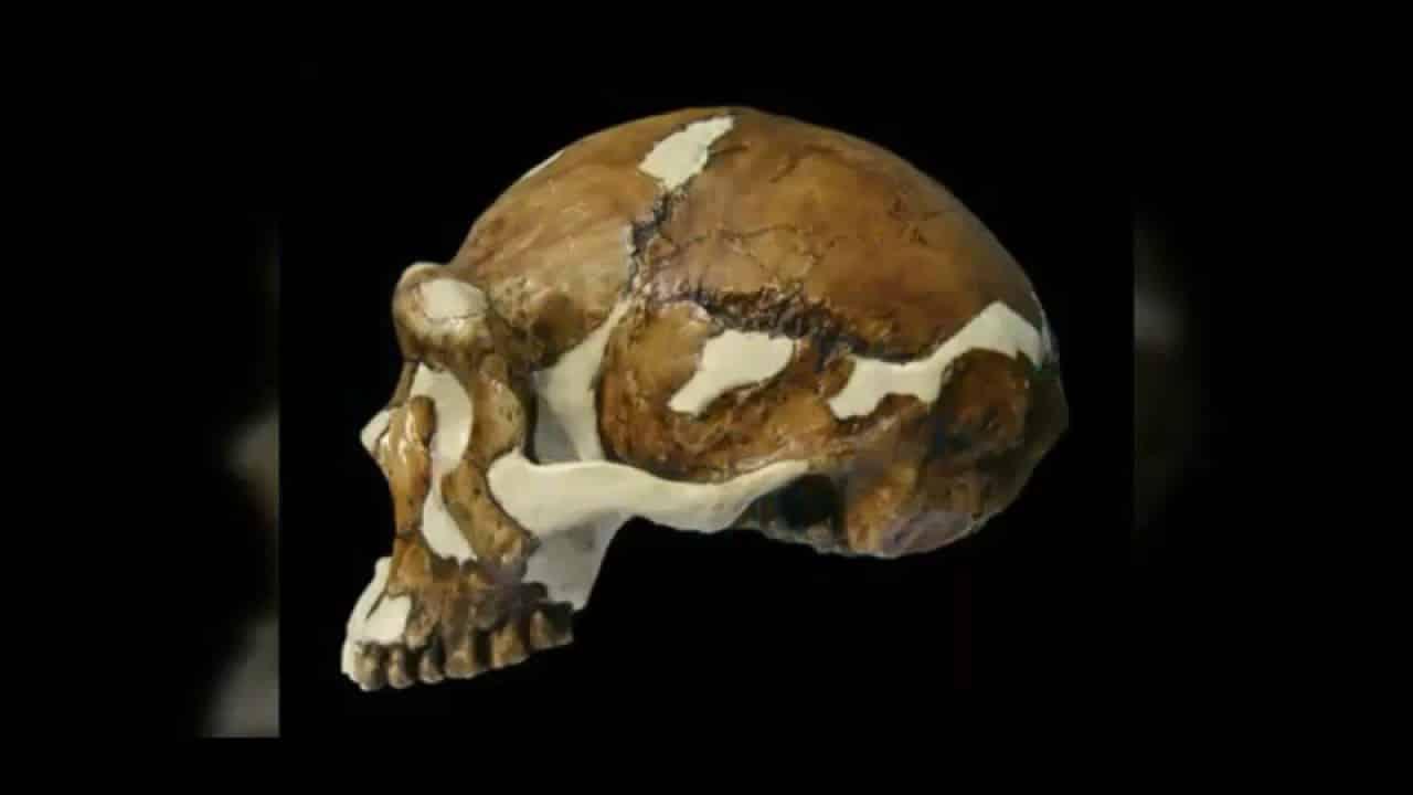 2. Sinanthropus Pekinensis