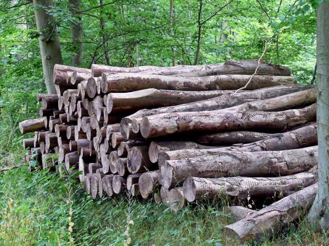 3. Lahan yang Berpindah atau Penebangan Hutan