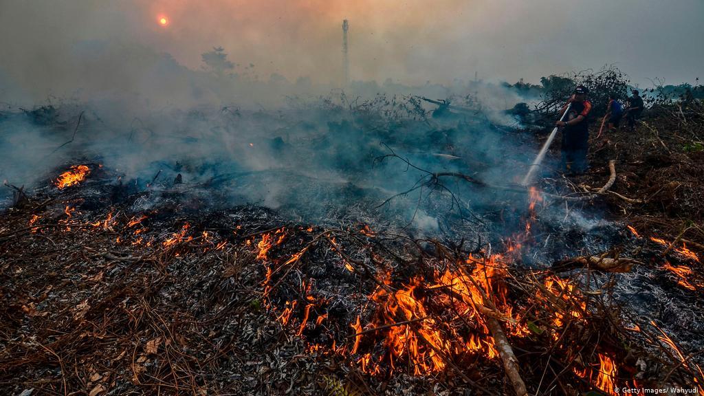 3. Penebangan dan Pembakaran Hutan