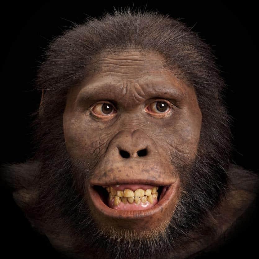 4. Australopithecus Africanus
