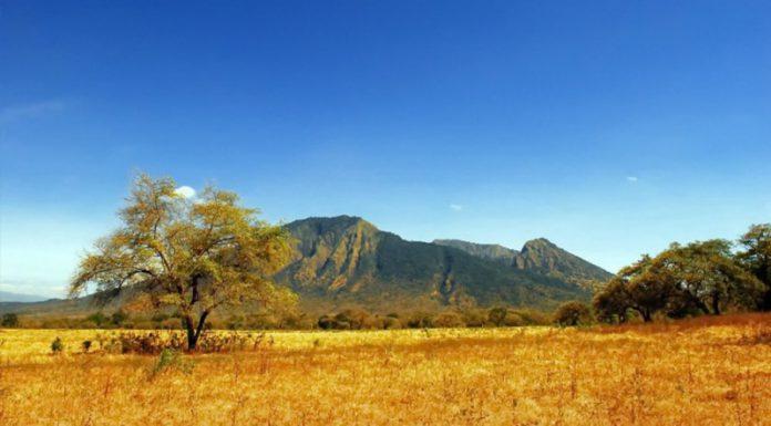 41. Gunung Baluran