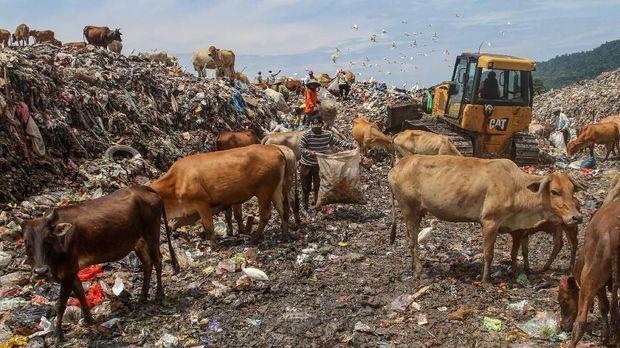 6. Sampah yang Berasal dari Peternakan atau Perikanan