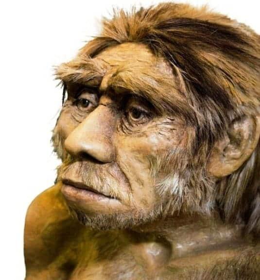 7. Homo Soloensis