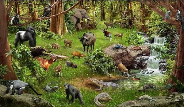 Ekosistem Hutan
