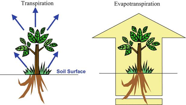 Evapotranspirasi