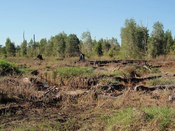 Fragmentasi dan hilangnya habitat