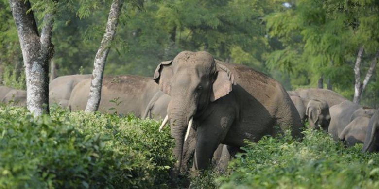 Hewan Langka Gajah
