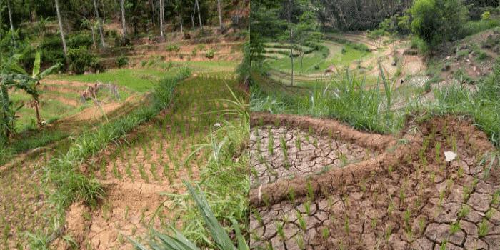 Menurunnya kesuburan tanah