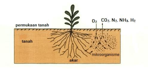 Pertumbuhan akar terhambat