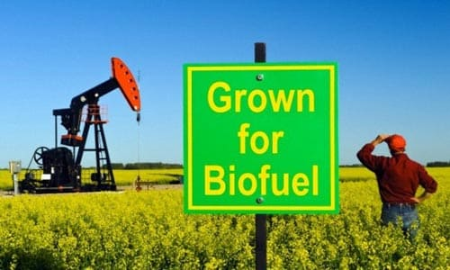 Sumber Energi Alternative Biofuel