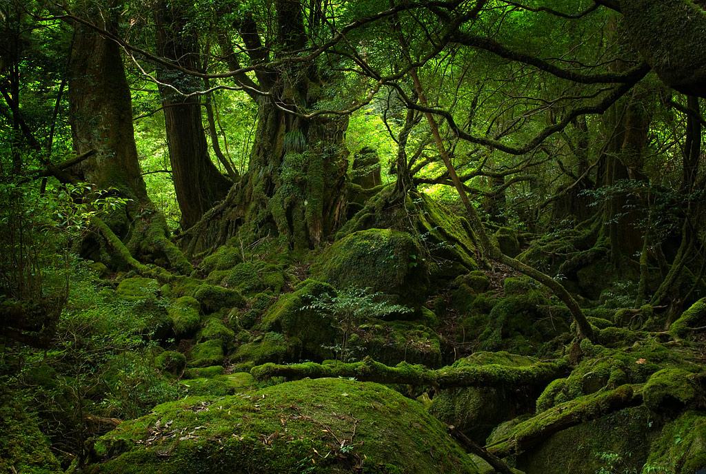 c. Hutan Tropis