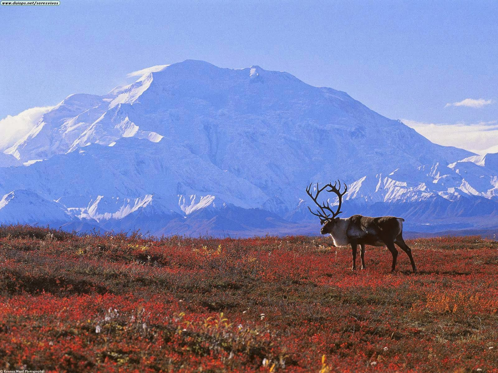 e. Bioma Tundra