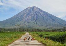 45+ Gunung Tertinggi di Indonesia Yang Indah Dan Wajib Di Kunjungi 3