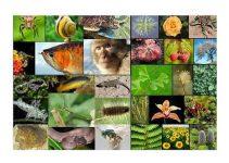 30+ Keanekaragaman Hayati : Pengertian, Manfaat, Tingkatan, Kerusakan, Penanggulangan 8