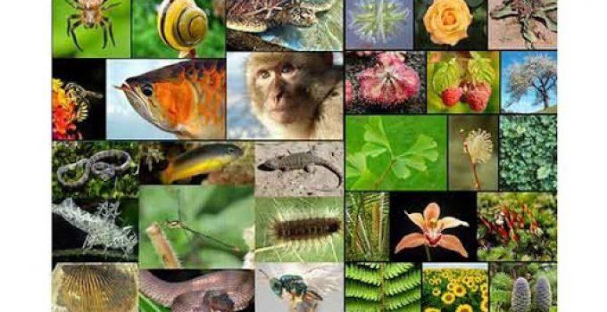 30+ Keanekaragaman Hayati : Pengertian, Manfaat, Tingkatan, Kerusakan, Penanggulangan 1