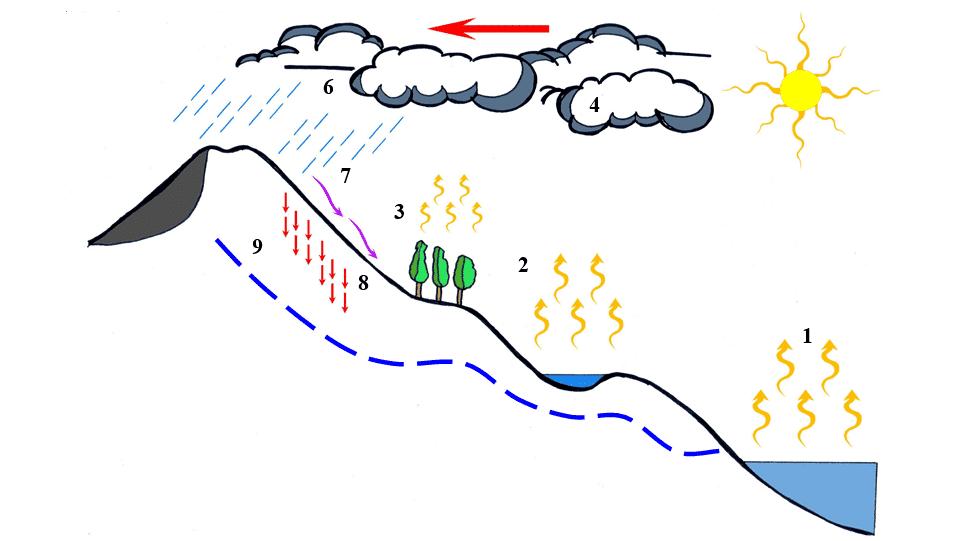 Siklus Hidrologi : Pengertian, Komponen, Macamnya (Lengkap)