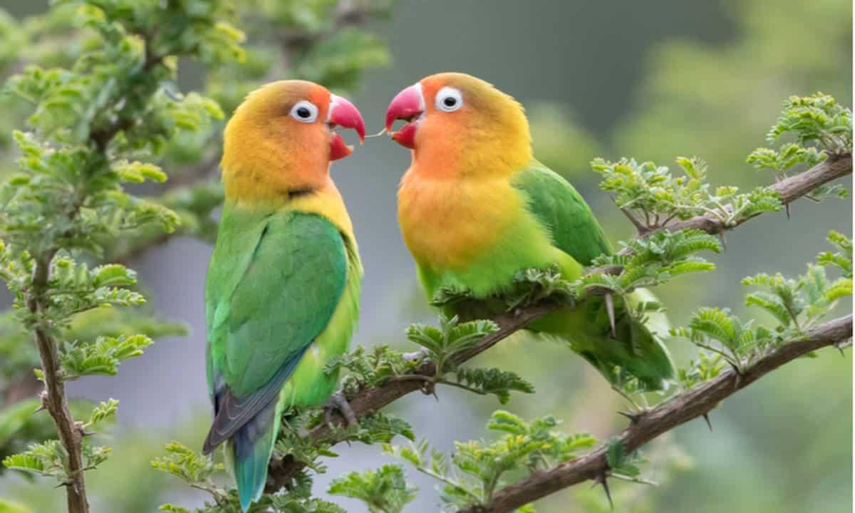 Ciri-Ciri Makhluk Hidup Burung