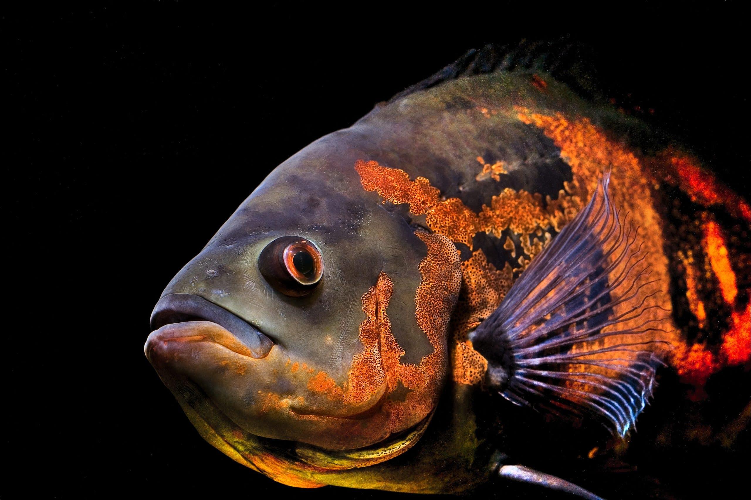 Ciri-Ciri Makhluk Hidup Ikan