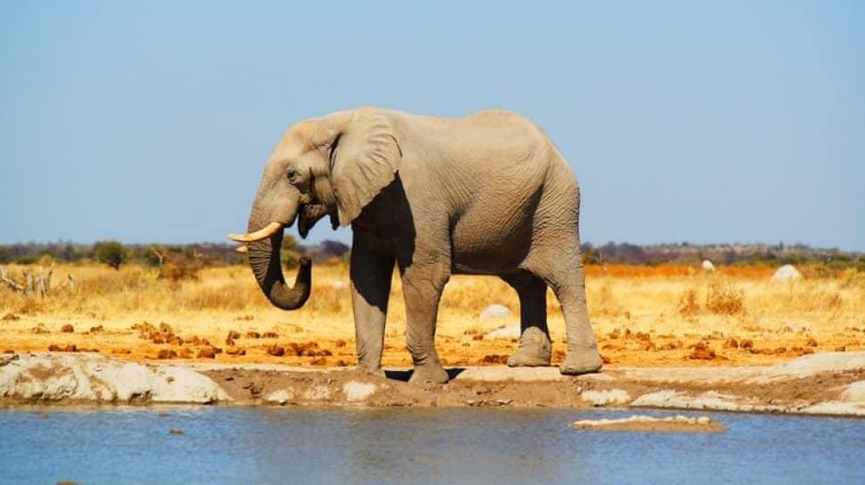 Ciri-Ciri Makhluk Hidup gajah