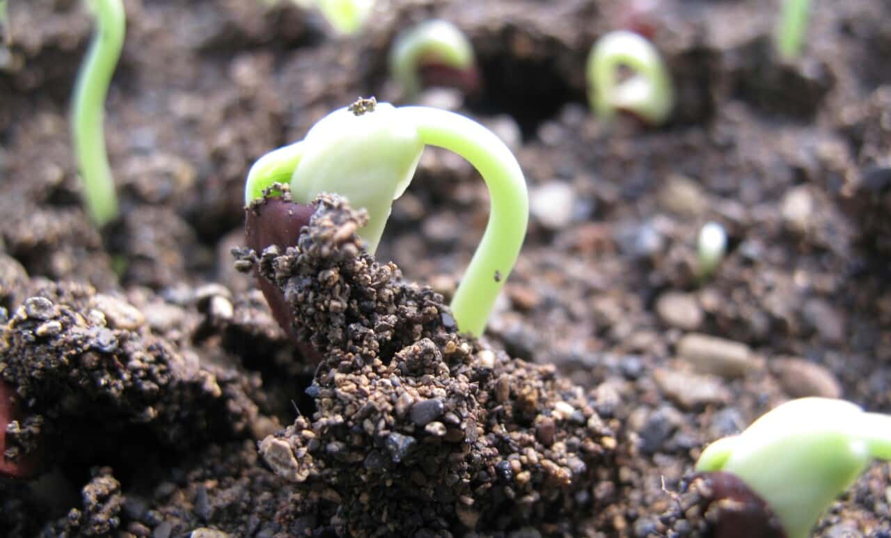 6. Tumbuh serta berkembang