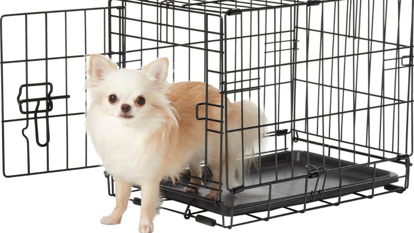 Cara Merawat Kandang Anjing Pitbull