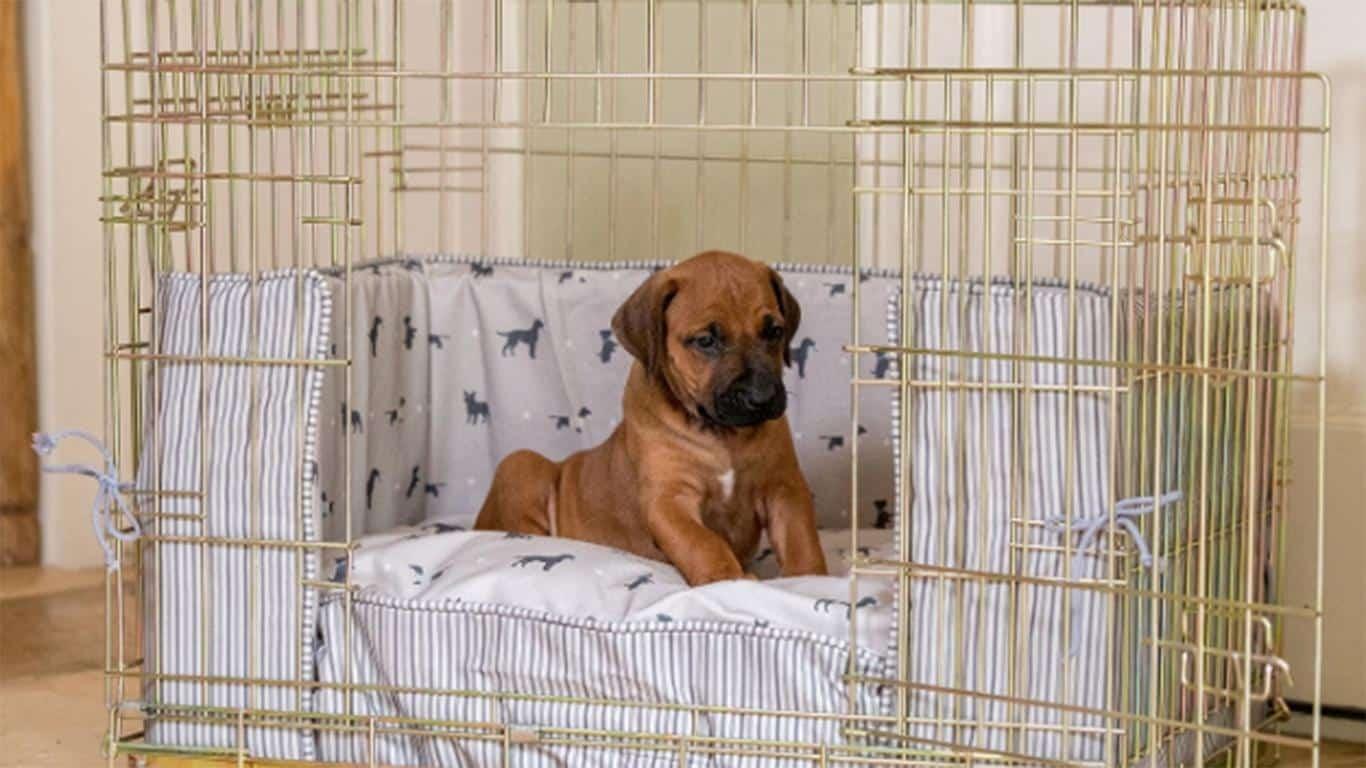 Cara untuk merawat Kandang Anjing Samoyed