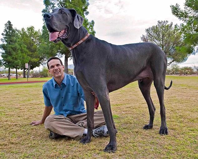 Faktor yang Mempengaruhi Harga Anjing Doberman