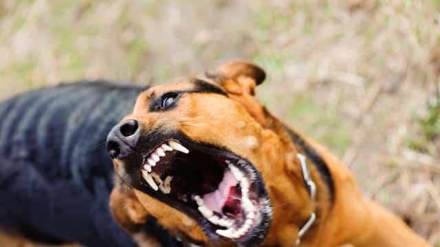 Hal-hal yang Perlu Diperhatikan Sebelum Membeli Anjing Doberman