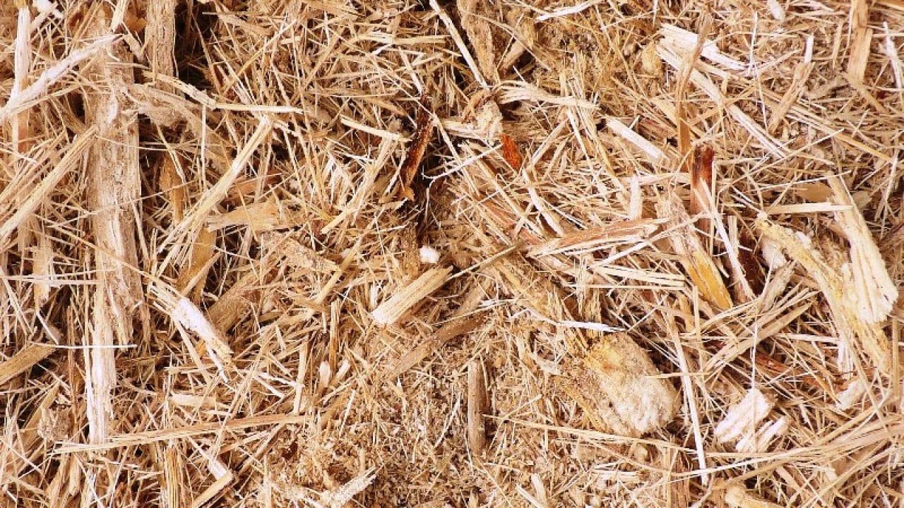 Contoh Proposal Lengkap Penelitian Limbah Tebu